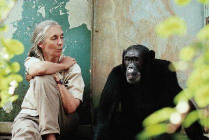 jane goodall Chimpanzee Jane
